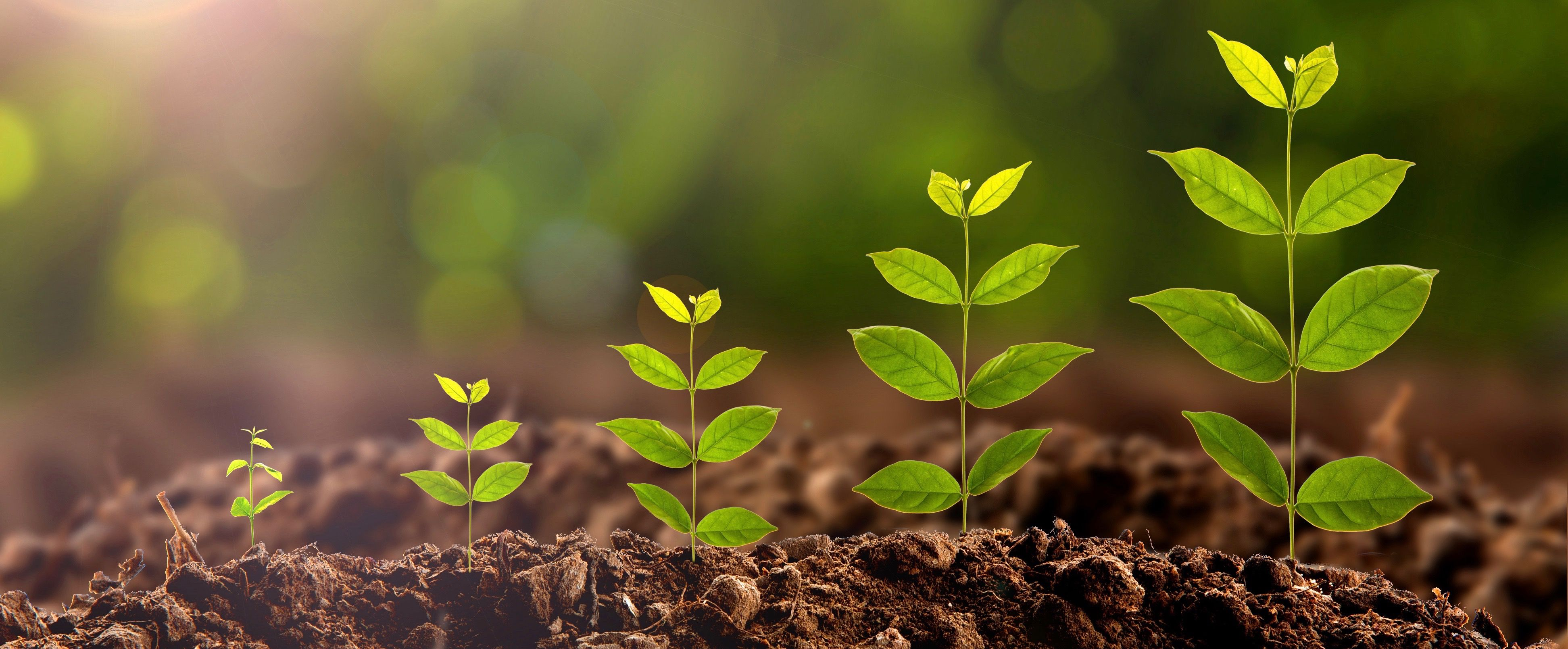 Growth Experts to Follow Plant Growth over time